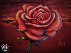 Grafiteros de Valencia - Graffiti rosa carmen